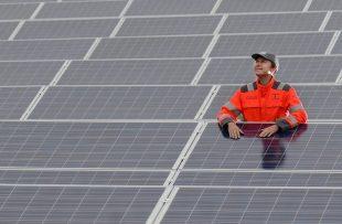 A worker standing in solar farm